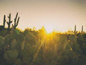 The Future of Solar Energy in Arizona